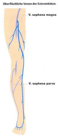 Die Ansätze auf dem Kern des Fusses der Beine